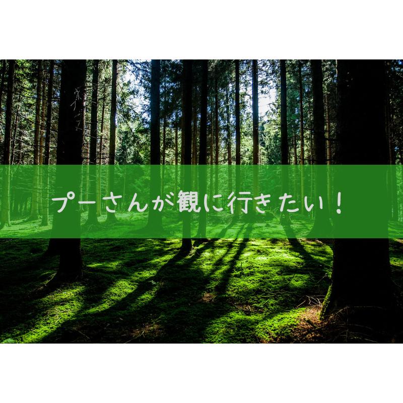 f:id:sayutan14:20180915001945p:plain