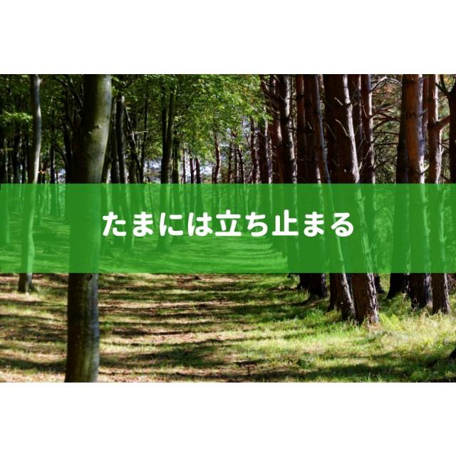 f:id:sayutan14:20181117000202j:plain