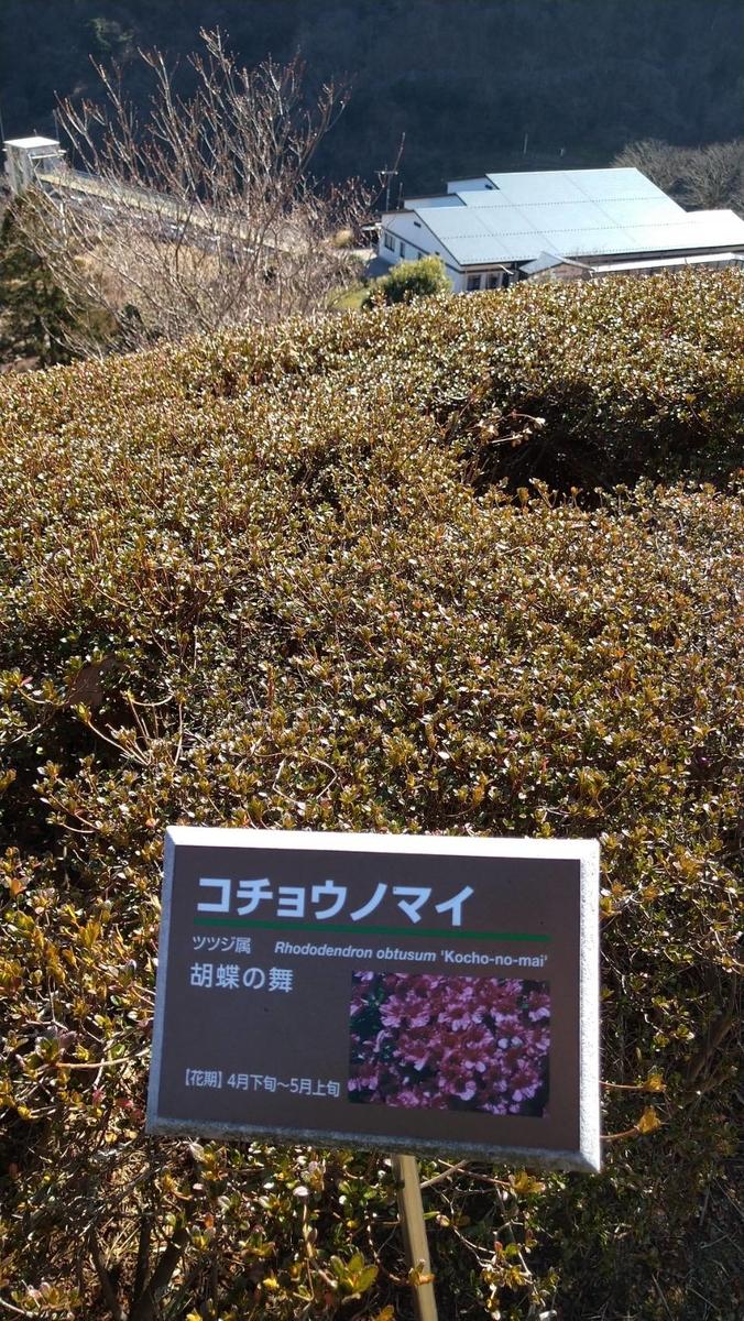 f:id:sb_natsumi:20210207232831j:plain