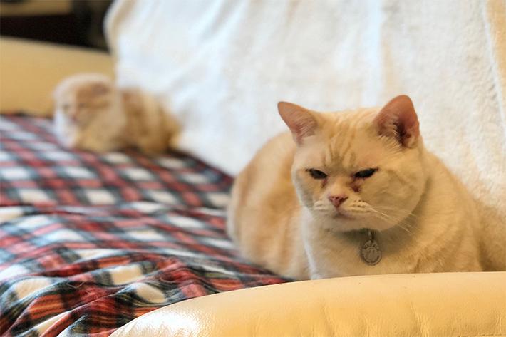 スマホでできる猫撮影の極意