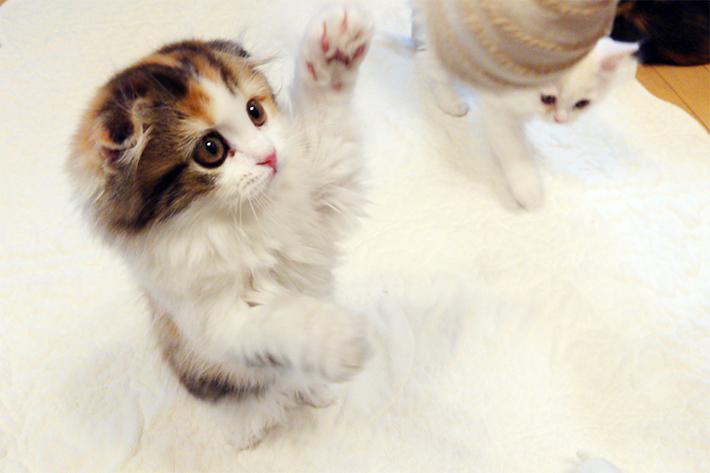 【写真編①】猫パーンチ! 猫をスマホでさらにかわいく撮れる! 猫写真家が教える撮影テクニック