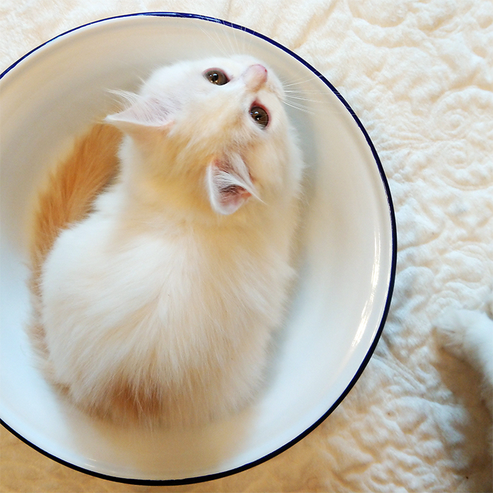 【写真編②】猫をスマホでさらにかわいく撮れる! 猫写真家が教える撮影テクニック