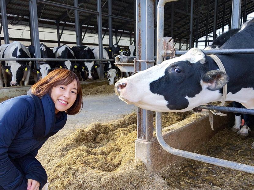 乳牛と一緒に撮影