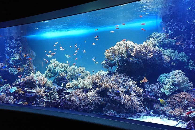 意外と知らないサンゴの生態。白化の原因や保全活動について、サンシャイン水族館の飼育スタッフに聞いてみた