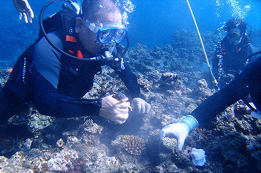 サンゴの保全活動を通じて海洋環境を守る