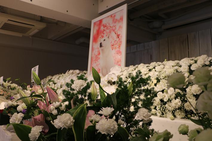 来場者からたくさんの献花が送られました。