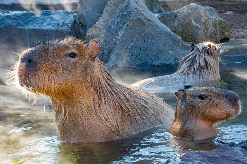 ゆっくりお風呂に入って癒されたい。お悩み別オススメ入浴方法とプロ推薦「いま行きたい温泉」情報