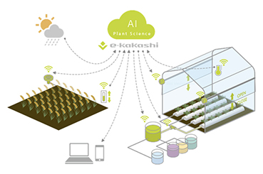 e-kakashi   How SoftBank is Using Data-driven Agriculture to Solve the Global Food Problem