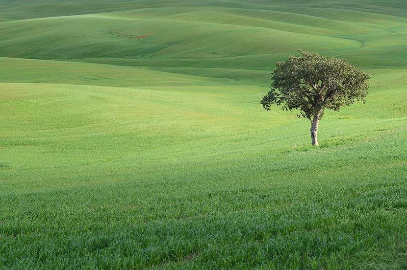 「e-kakashi」は芝生の光合成が推定できる、唯一のシステム