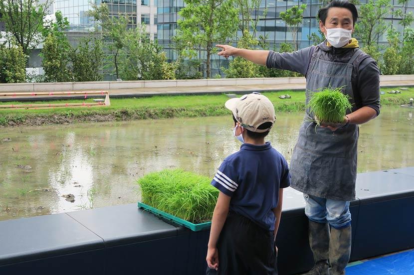 オフィスビルで実現する日本の稲作文化