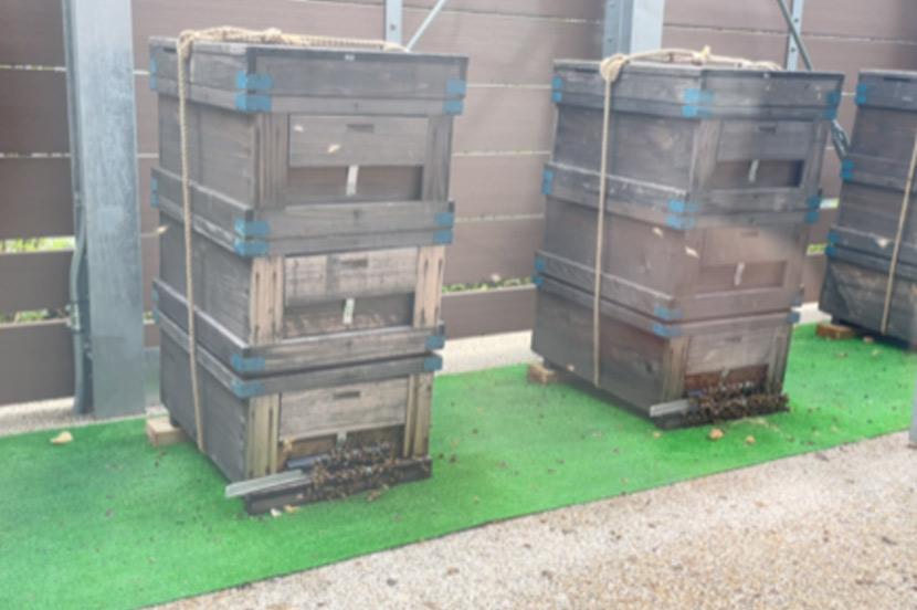 ミツバチが教えてくれる周辺環境。竹芝のハチミツはさまざまな花の蜜で作られた「百花蜜」