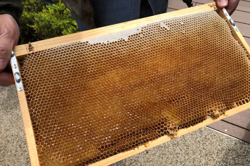 4月28日に行われた1回目の採蜜の様子。