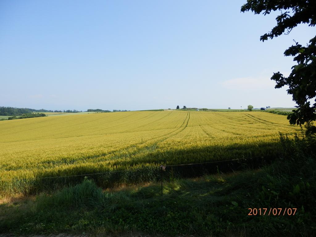 北海道の麦畑の画像