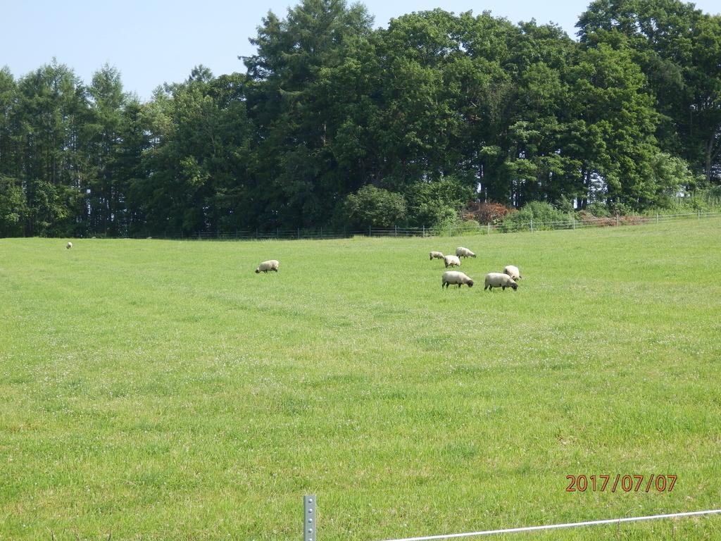 北海道の牧場の羊の画像