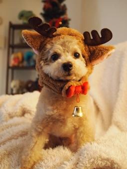 トナカイの格好をした犬