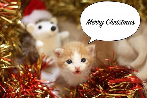 Marry Christmas と言っている子猫