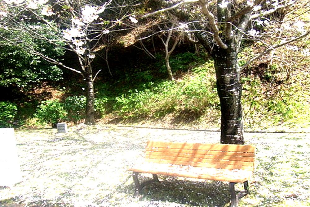 散った桜の木の下に誰も座っていないベンチある画像