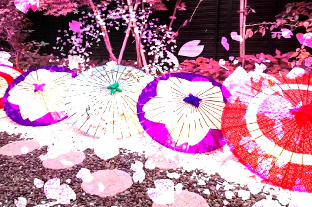 桜の絵の入った華やかな傘が庭に並んでいる画像