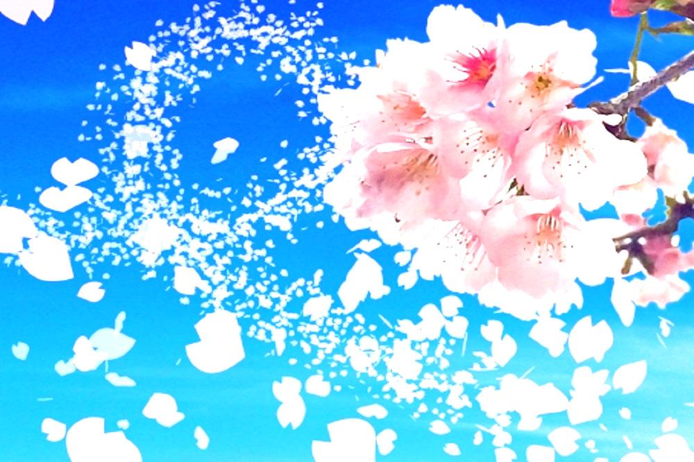 桜の花びらが空に舞っている画像