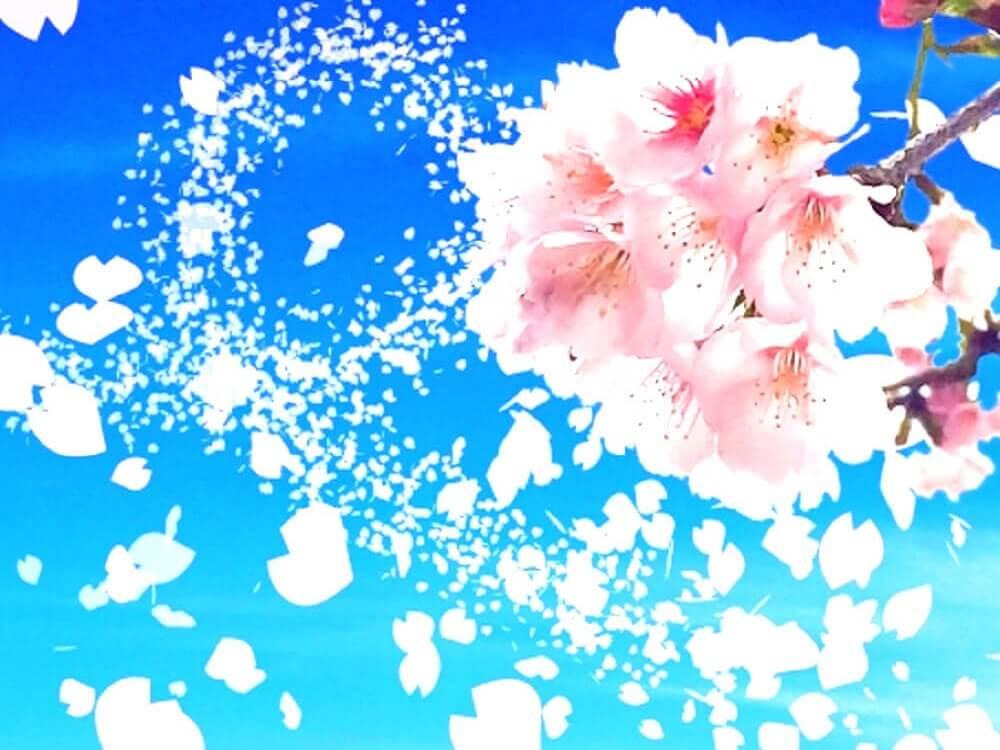 桜の花びらが空に舞っている