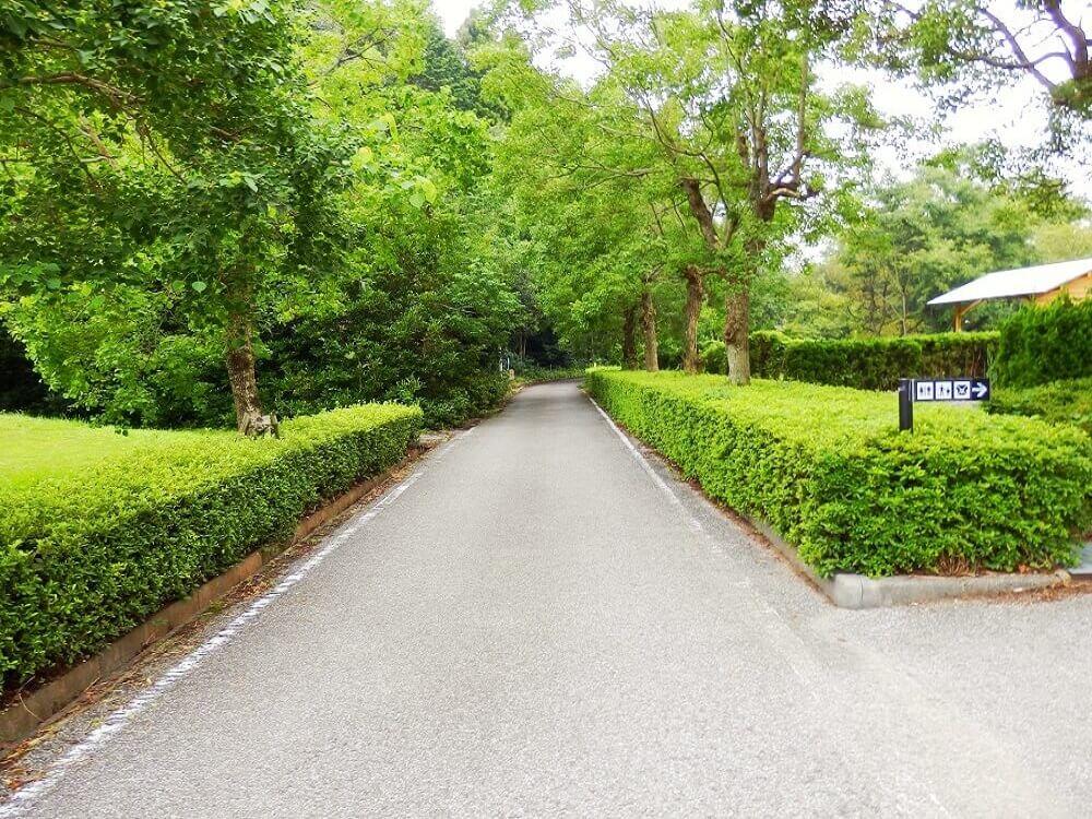 グリーンパーク山東の並木道