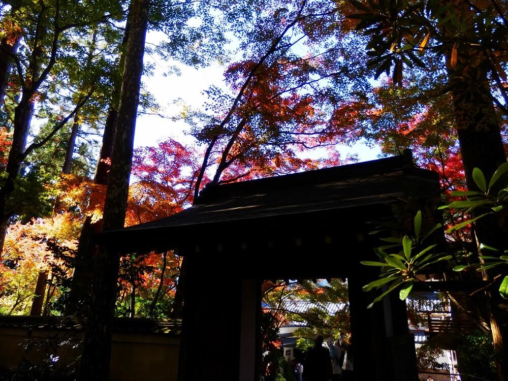 大原三千院の境内の紅葉