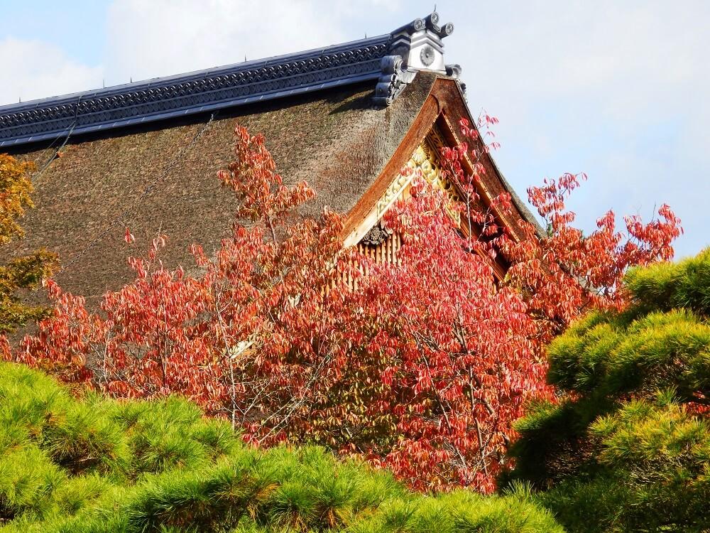 京都御所の境内の紅葉した樹木と建造物