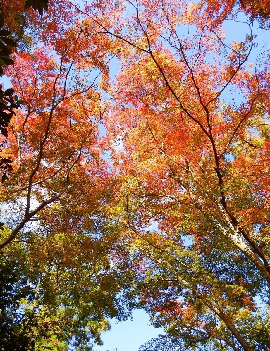 清水寺の音羽の滝から十一重石塔への参道での樹々の紅葉