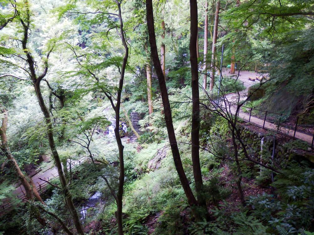 岐阜県の養老の滝への遊歩道の途中の森林