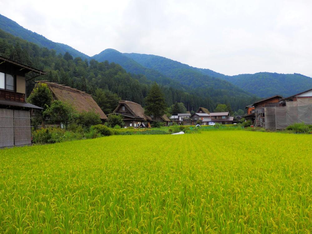 白川郷合掌村のかやぶき屋根の建造物と田園風景
