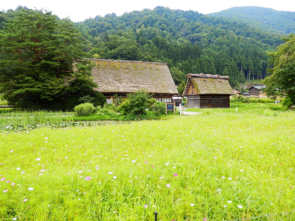 白川郷合掌村のかやぶき屋根の建造物と花畑