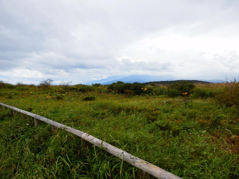 高ボッチ山頂への登山道