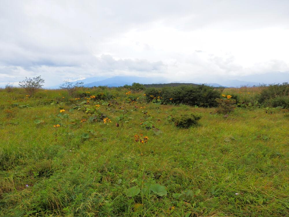 高ボッチ山頂への登山道の周囲の風景