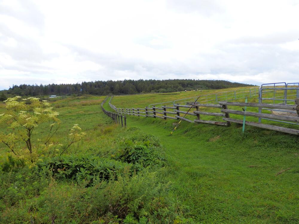 高ボッチ高原牧場