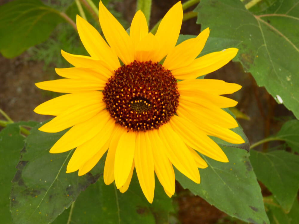 長野県の立石公園の駐車場の花壇の花
