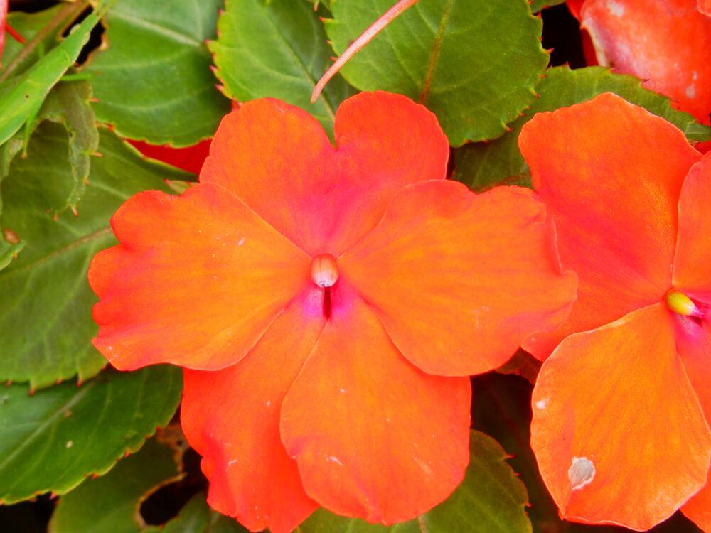 日本平の駐車場の植栽の花