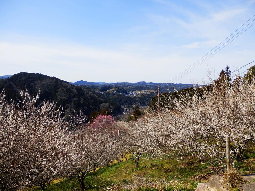 月ヶ瀬の真福寺の本堂の小脇から名張川(五月川)方面の眺望