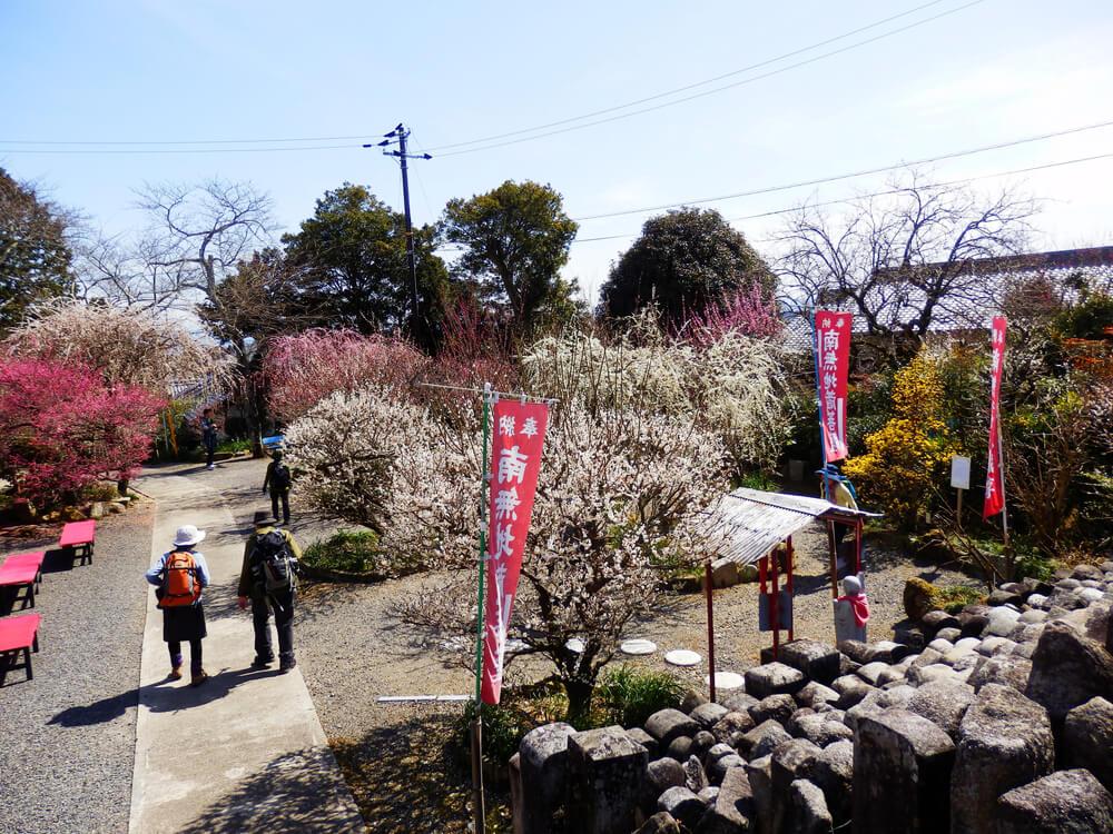 月ヶ瀬の真福寺の本堂からの境内の眺め
