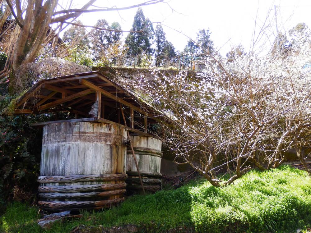月ヶ瀬の『名勝月瀬梅林』の石柱から一目八景への参道脇の大きな梅を漬ける樽