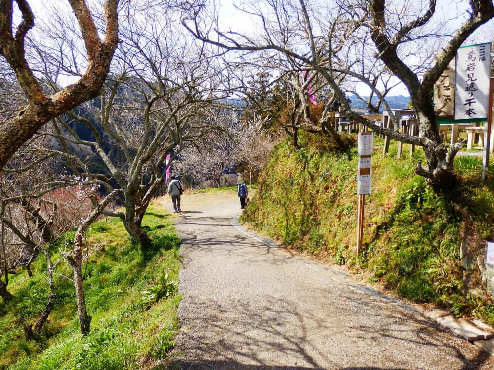 月ヶ瀬の一目八景から品種園への参道のアーチのような梅の木