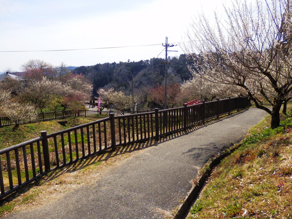 月ヶ瀬梅渓の品種園の梅の木