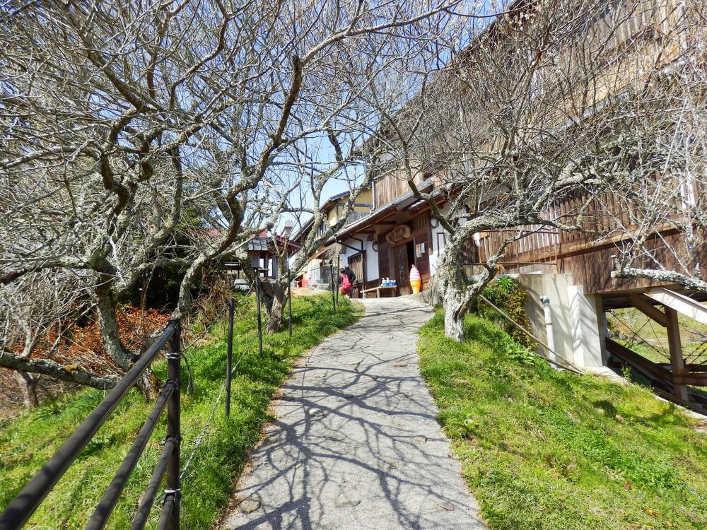 品種園から尾山天神神社への参道の途中の赤い橋を渡った先のスロープ