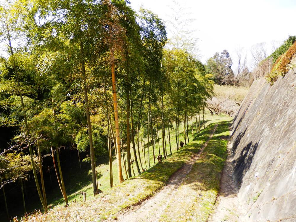 月ヶ瀬梅渓の天神梅林の土産物屋の手前の小道の竹林