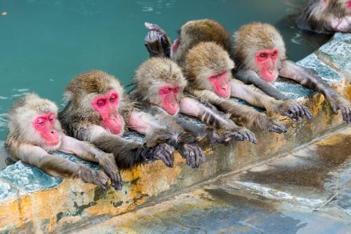 温泉に入っている日本猿