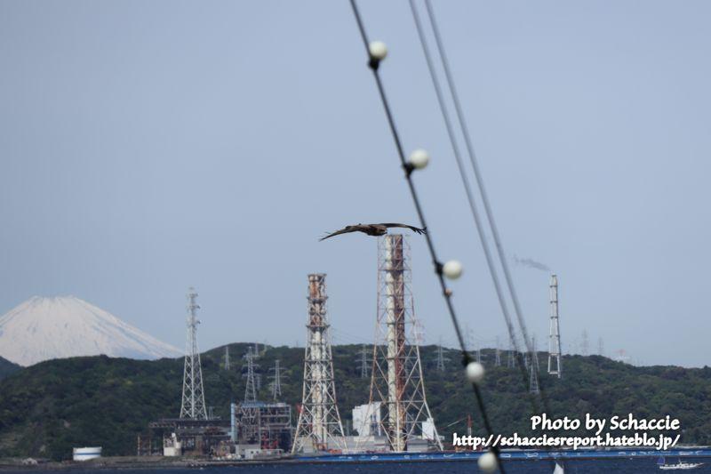 東京湾フェリー-海-昼-2