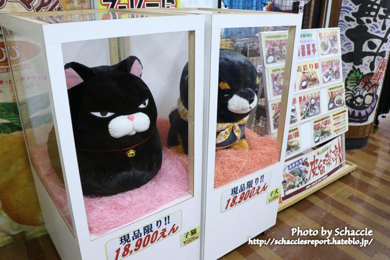 東京湾フェリー-猫