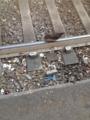 煙草とかゴミ捨てすぎだし鳩は線路上歩いてるし