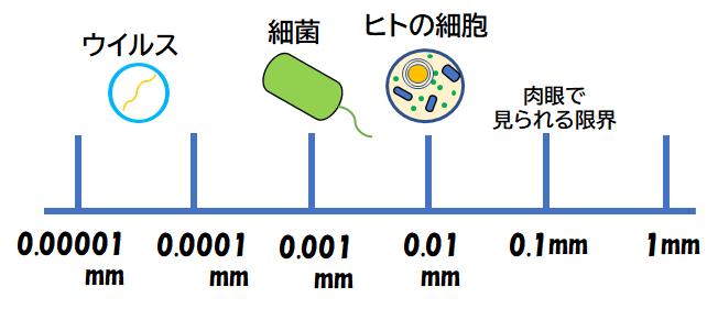 細胞とウイルスの大きさを比較