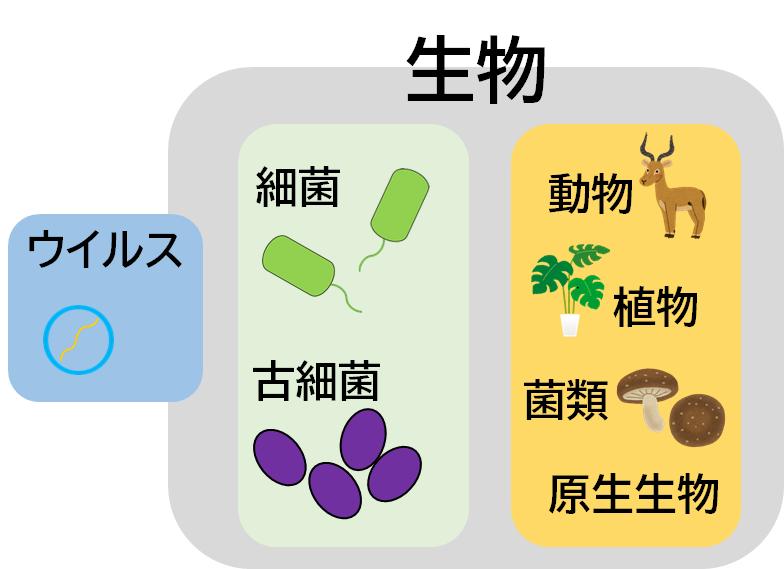 ウイルス、細菌、菌の分類