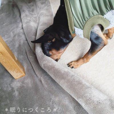 f:id:sd_marisuke:20171214103457j:plain